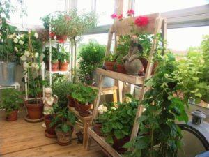 Vertical garden at the terrace
