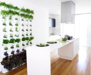 Vertical garden in kitchen area.