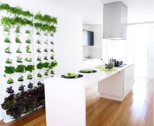Vertical garden in kitchen area.