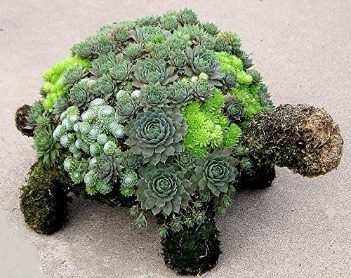 Turtle made for garden decor.