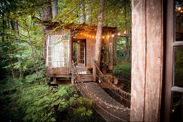 Tiny house in forest surrounded by trees, leaves