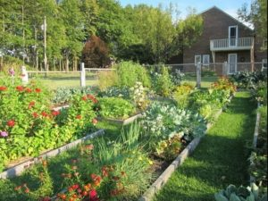 Edible garden 2017