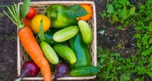 The Importance of Vegetables for a Healthy Life from your garden