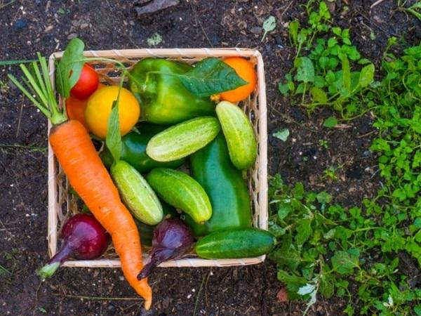 Vegetables from own garden